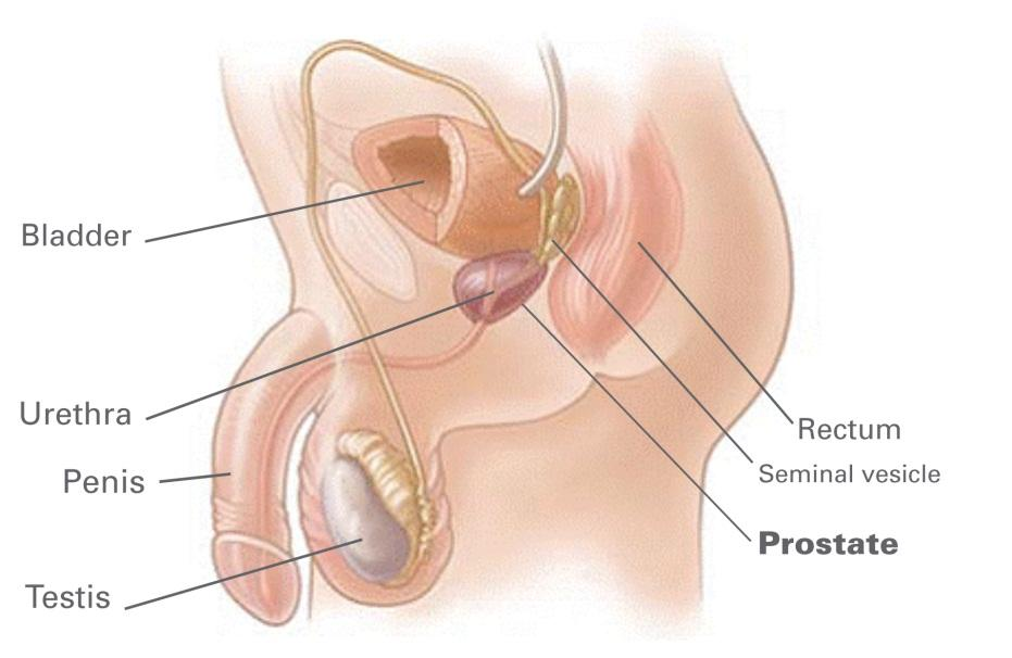 enlarged-prostate-diagram-canadian-pharmacy